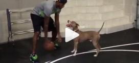 Vidéo : Paul George joue un 1 contre 1 avec… son chien
