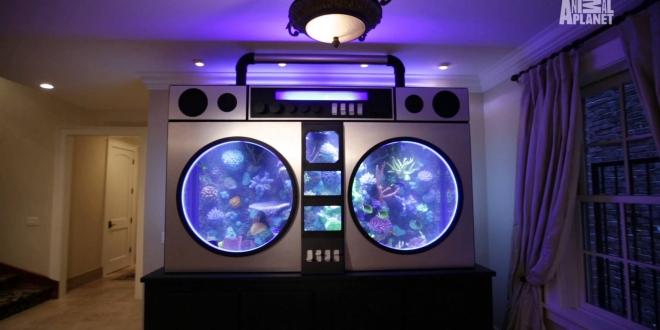 Insolite l 39 incroyable aquarium de jimmy butler for Aquarium insolite
